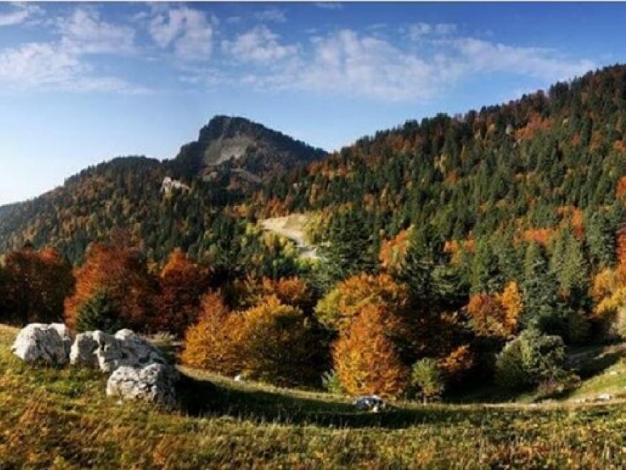 Le Bois de Chartreuse devient la première Appellation d'Origine Contrôlée (AOC) sur le bois en France, photo de la Chartreuse sur nature isère