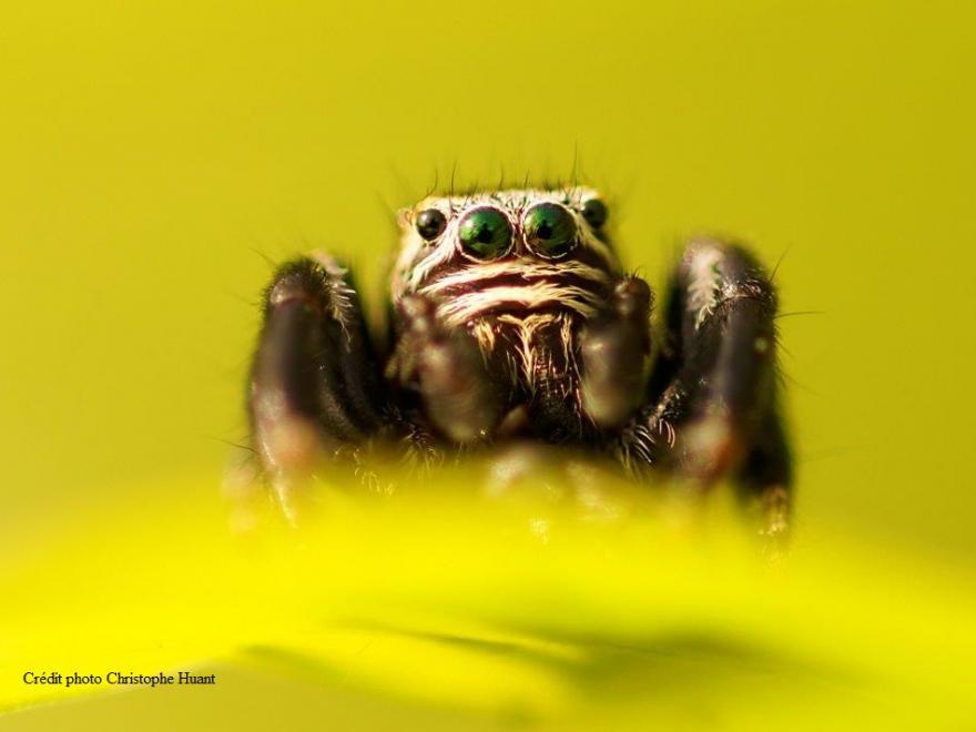 Photo d'araignée, Christophe Huant pour nature isère