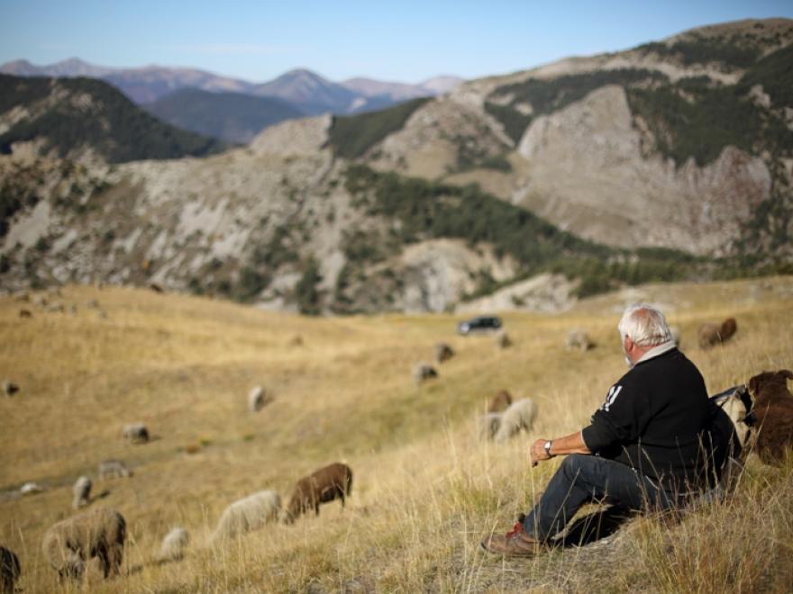 Photo Axel Falguier, Loups et moutons : des solutions ?