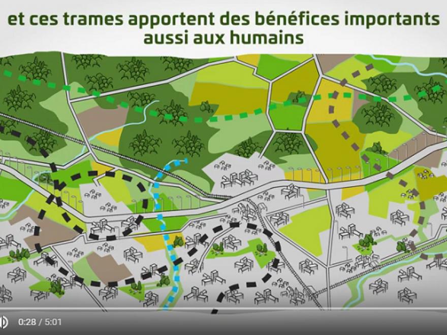 Capture écran du film d'animation sur les trames écologiques, sur nature isère