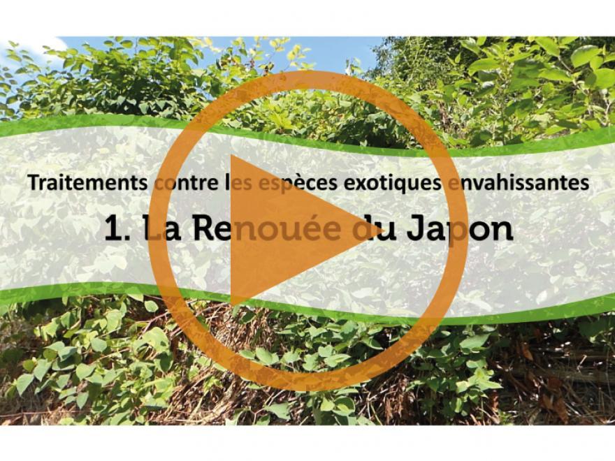 Vidéo du conservatoire des espaces naturels CEN Isère sur la renouée