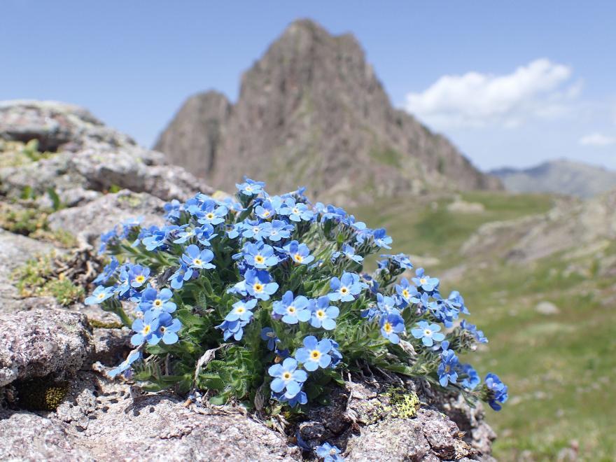 Biodiversité en haute montagne