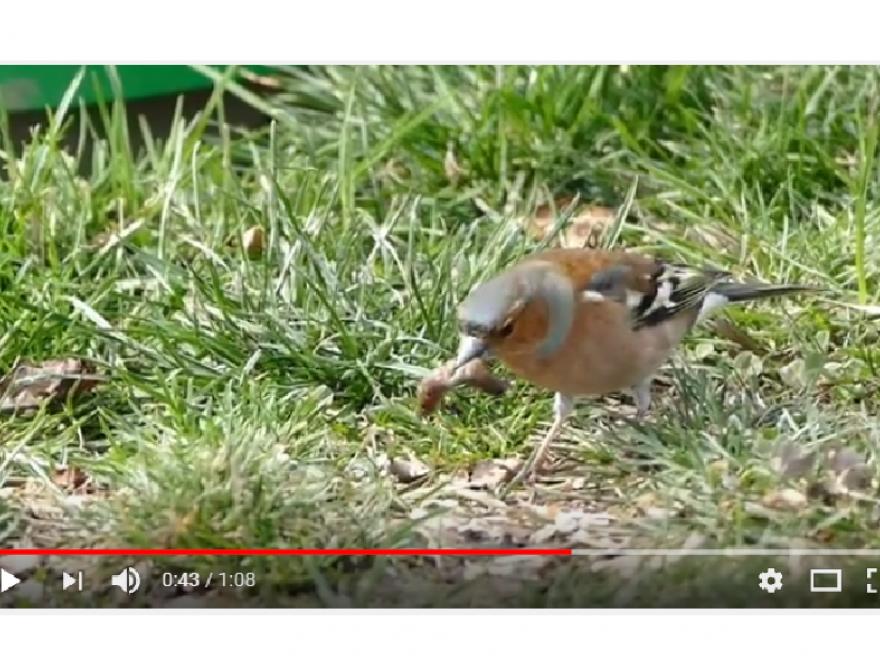 La nature en ville et en vidéo, nature isère