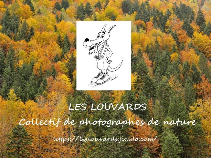 Affiche des louvards, Nature isère