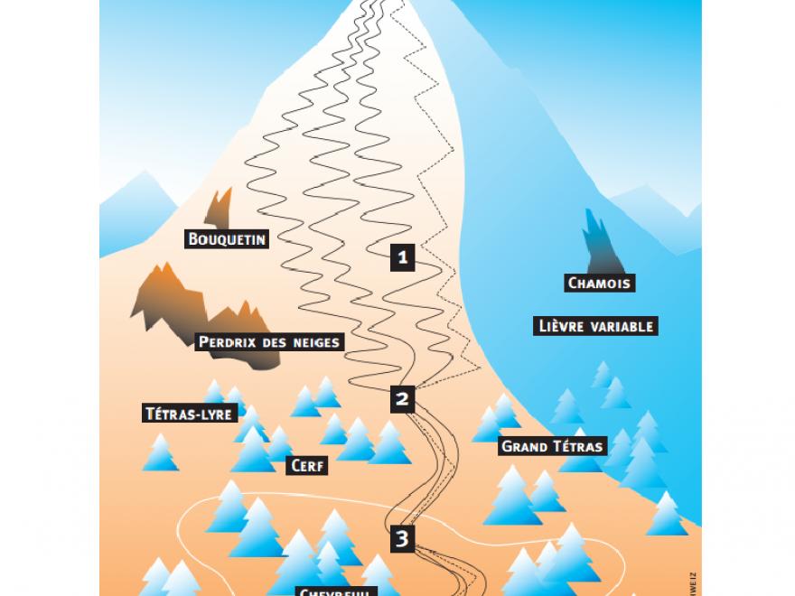 Page de la plaquette Neige sauvage de Mountain Wilderness, sur Nature isère