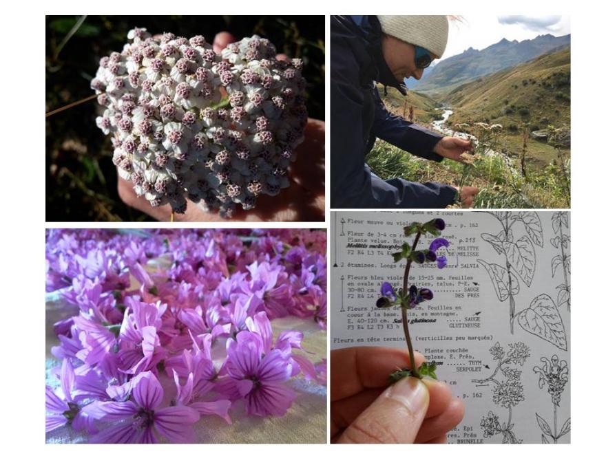 """Lancement formation """"Découverte des plantes sauvages de notre région - Vertus et utilisations"""""""