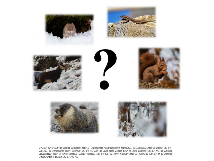 Photos du petit quizz d'actualité sur la vie des animaux en hiver, nature isère