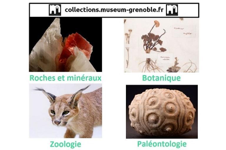 Page d'accueil du portail des collections du Muséum de Grenoble sur Nature isère