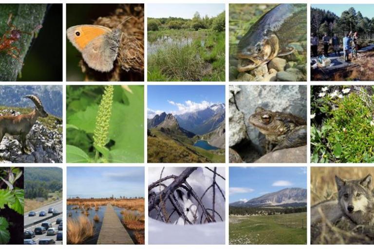 Visuels des études du pôle biodiversité du département de l'Isère sur Nature isère