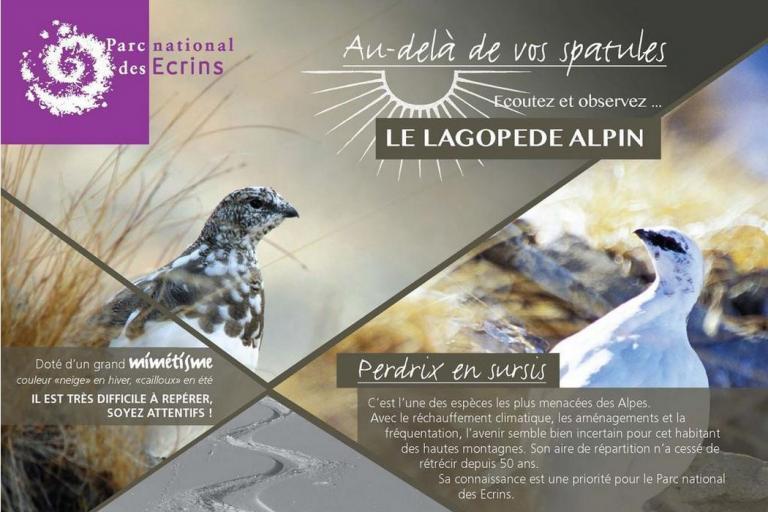 Affiche écoutez et observez le lagopède alpin du Parc national des Ecrins sur nature isère