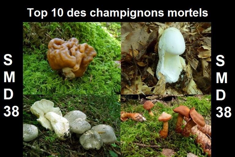 Top 10 des champignons mortels, SMD38 sur nature isère