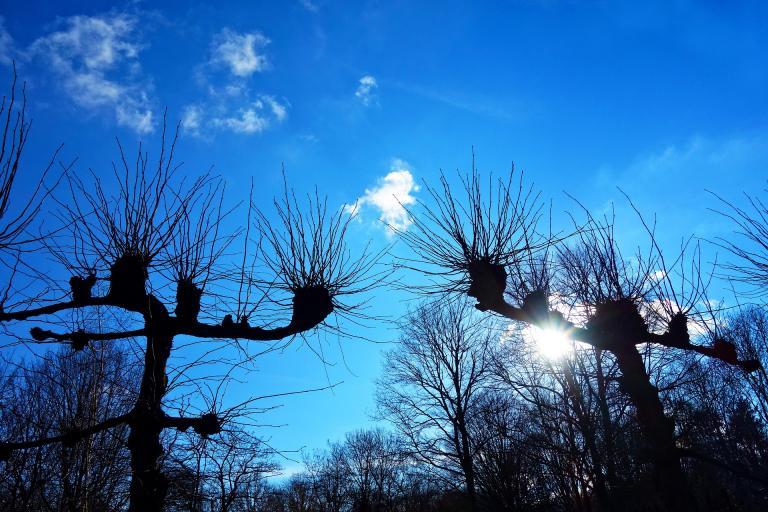 Photo d'arbres têtards, CC0 domaine public sur Nature Isère