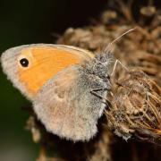 Photo d'un papillon, CC0, Nature Isère