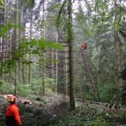 Débardage par câble mât aérien - ENS des Ecouges - 2019