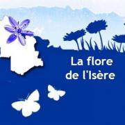 Visuel du site web Flore de l'Isère de Gentiana sur Nature isère