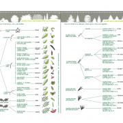 Planches de détermination des arbres de nos forêts