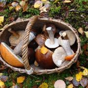 Panier de champignons, Image par Ksuh de Pixabay