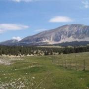 Photo d'une prairie sur les Hauts Plateaux du Vercors.