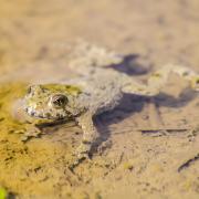 Photo d'un amphibien, CC0, Nature Isère