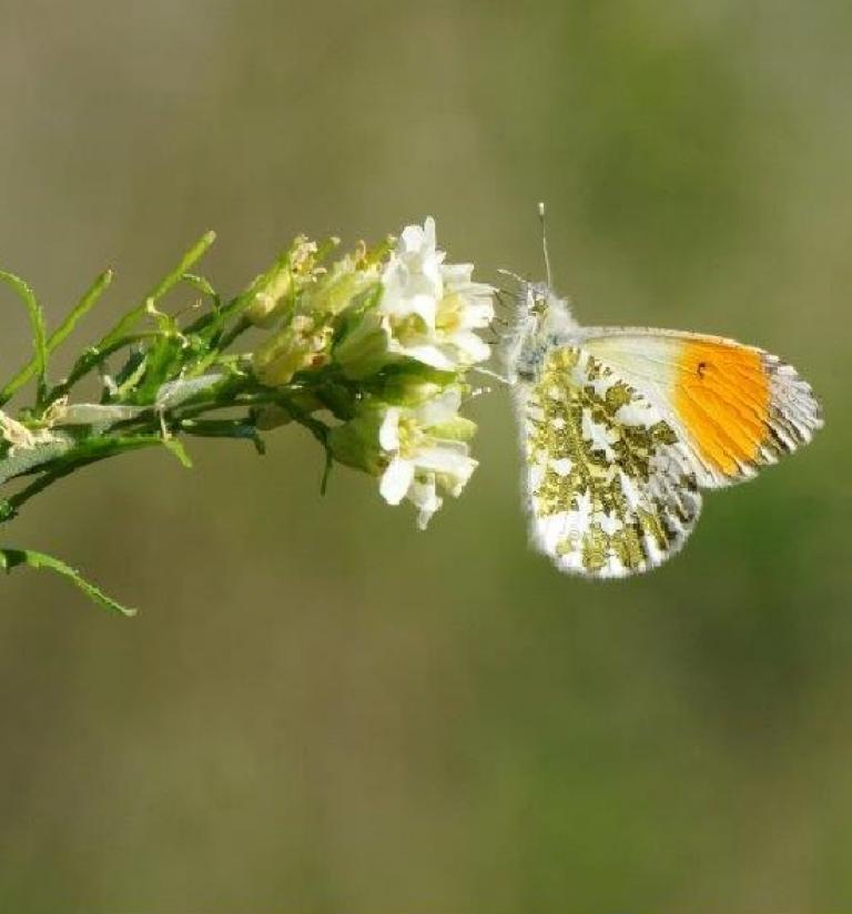 Papillon Christophe Huant sur nature isère