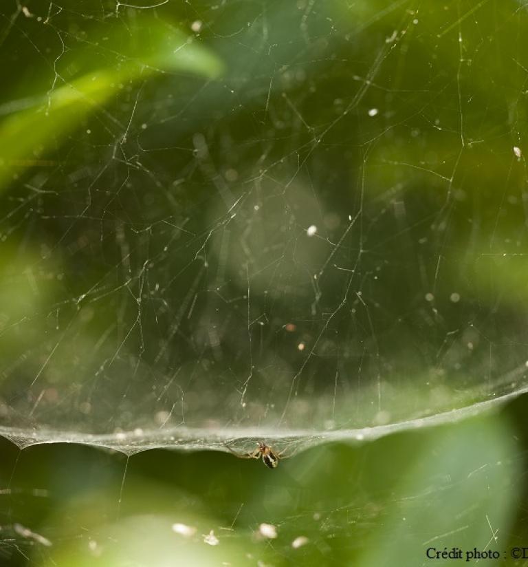 Photo araignée, Crédit photo : ©DenisPalanque.com sur Nature isère