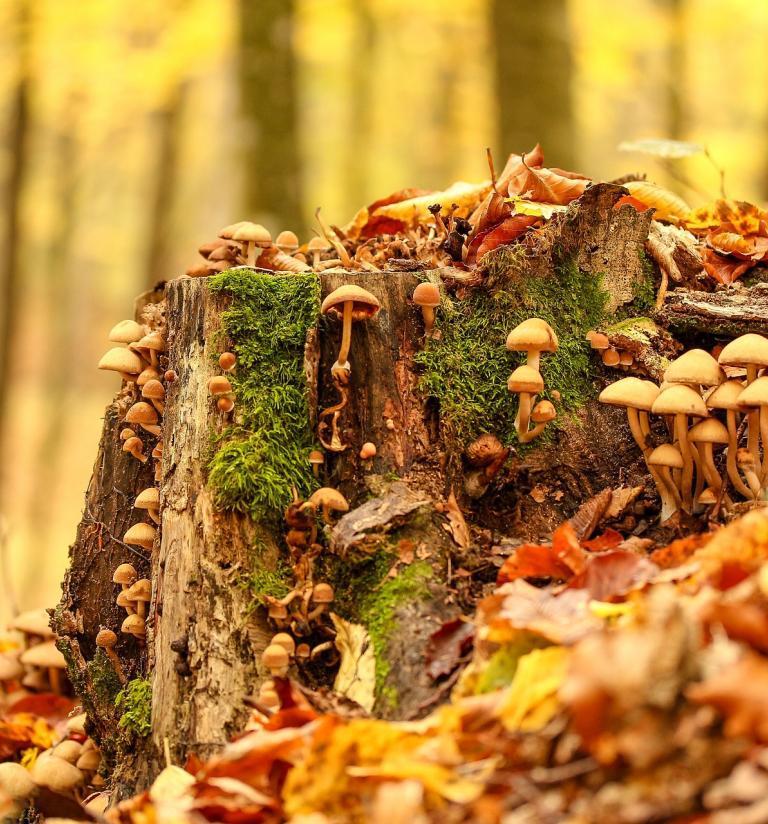 photo_de_valiunic_tronc_arbre_champignon_cc0_domain_public