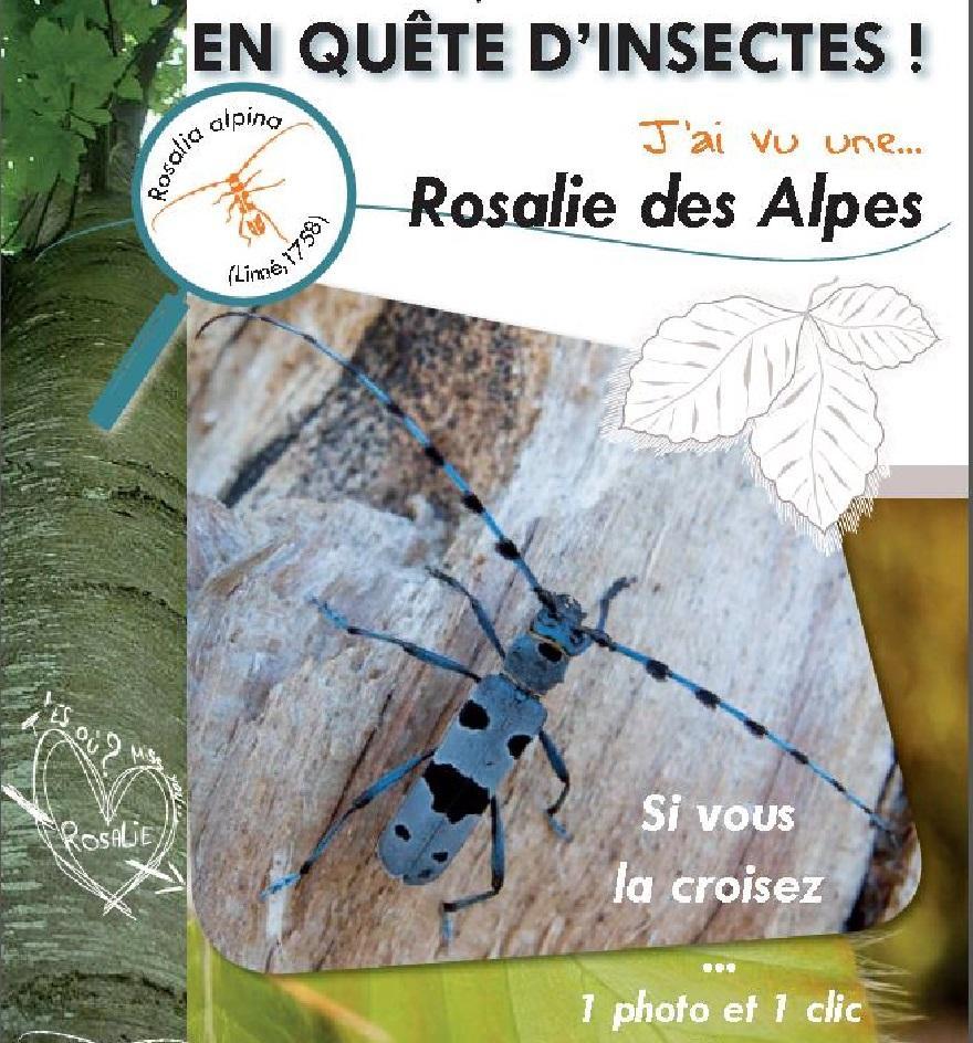 Fiche enquête Rosalie des Alpes nature isère