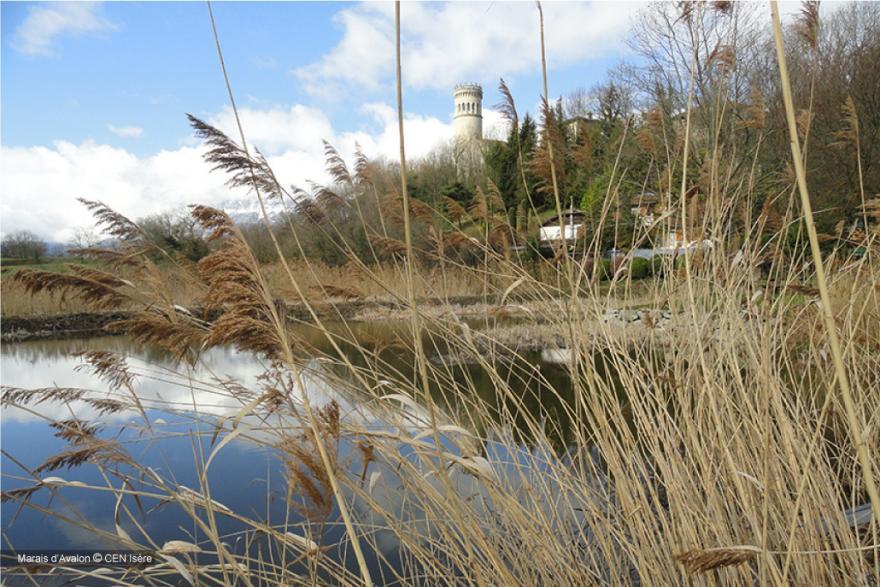 La tour et le marais d'Avalon à Saint-Maximin