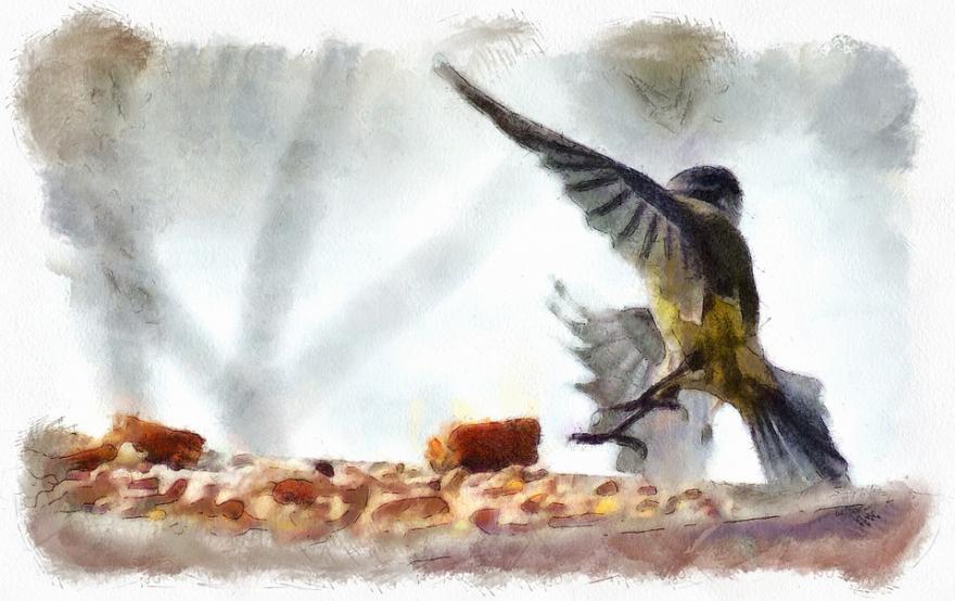 Dessin d'une mésange à la mangeoire, CCO public Domain