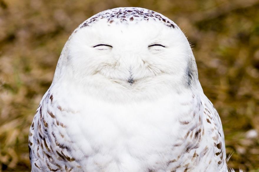 Chouette souriante