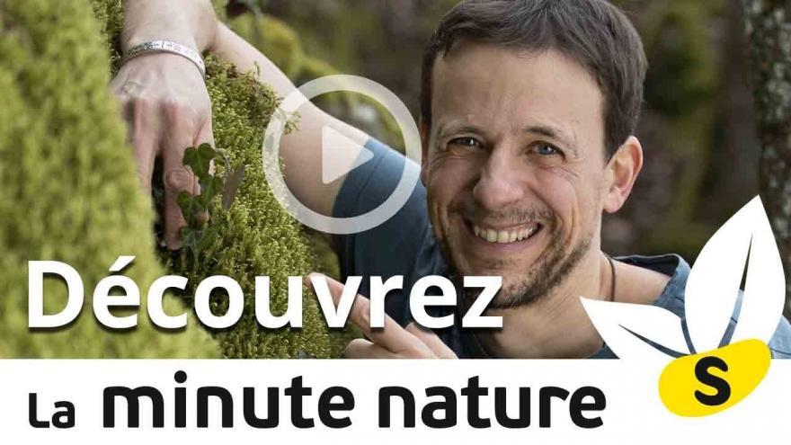 """Visuel """"Découvrez les vidéos de La Minute nature"""" sur nature isère"""