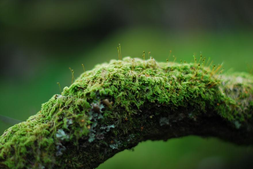Lichen, CC0, Nature Isère