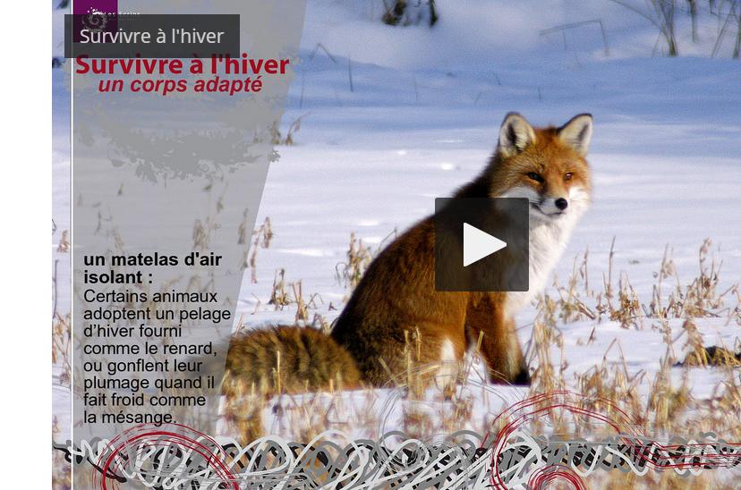 Capture écran de la vidéo Survivre à l'hiver du Parc national des Ecrins
