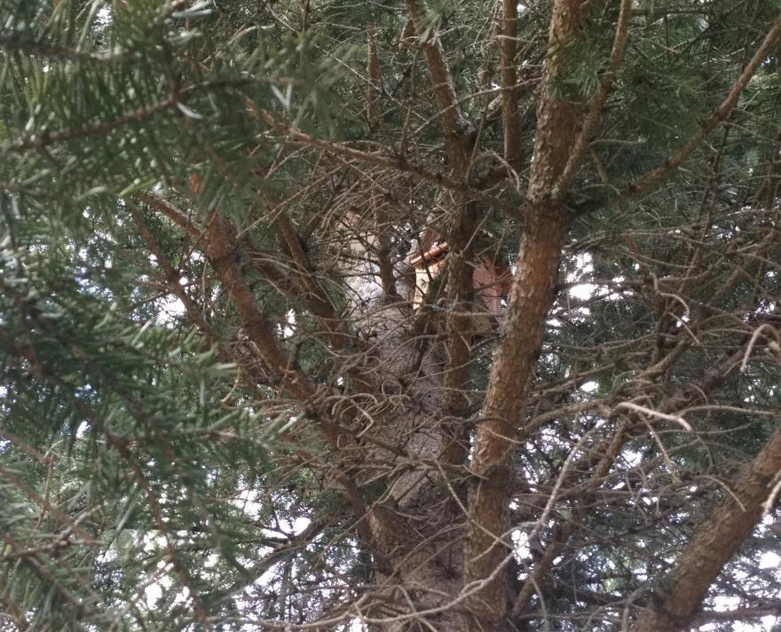 Nichoir en bois parmi les branches d'un sapin