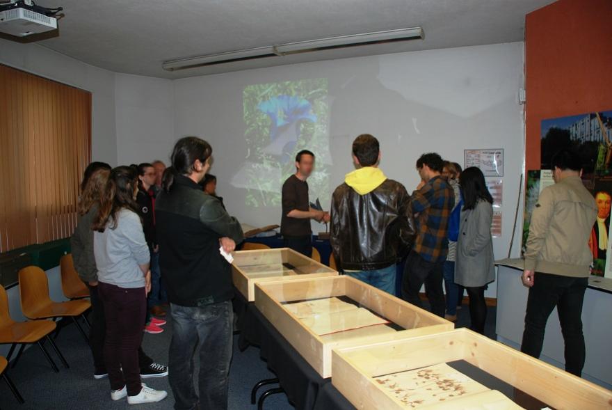 Animation découverte herbier Muséum, photo du Muséum de la ville de Grenoble sous licence CC-BY-NC-ND.