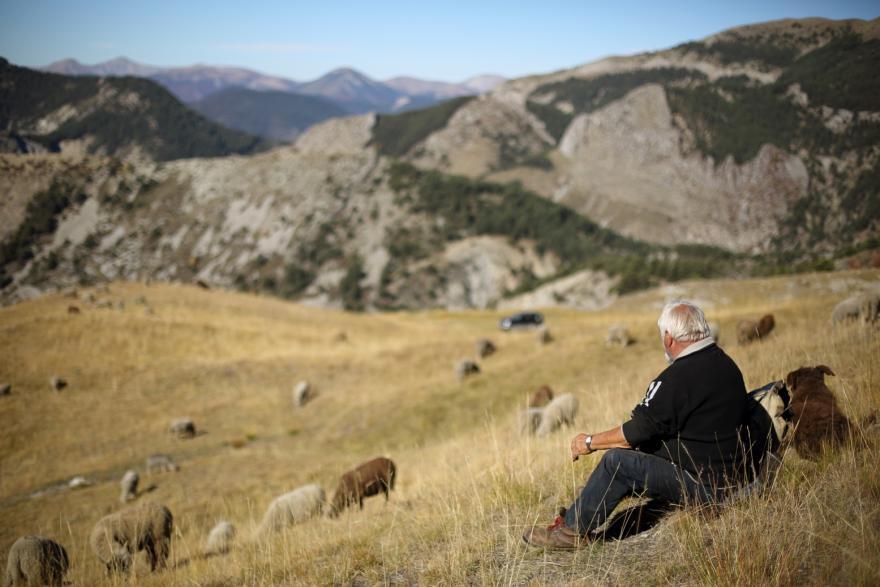 Loups et moutons des solutions ©Axel Falguier