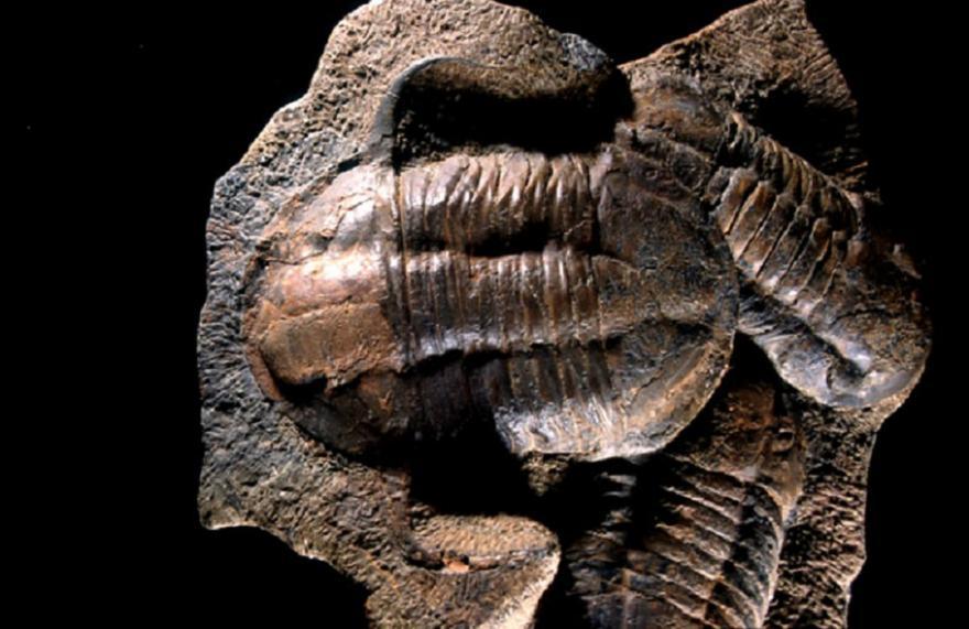 Trilobite, dans la salle Parole de Terre, Muséum de la ville de Grenoble, nature isère