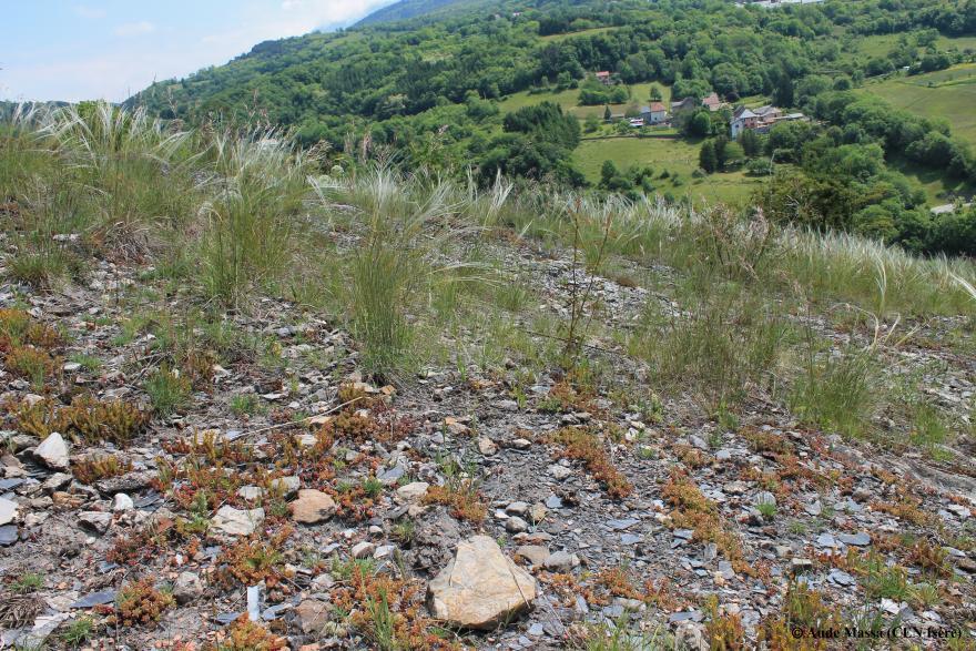 Pelouse sèche La motte CEN Isère - Nature Isère