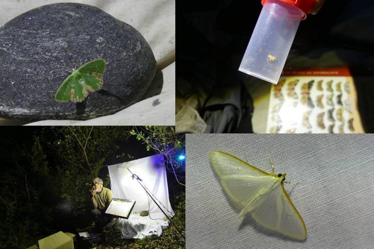 Sortie observation des papillons de nuit