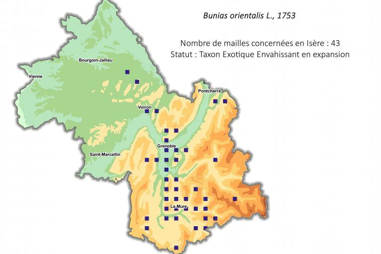Aire de répartition du Bunias d'Orient en Isère