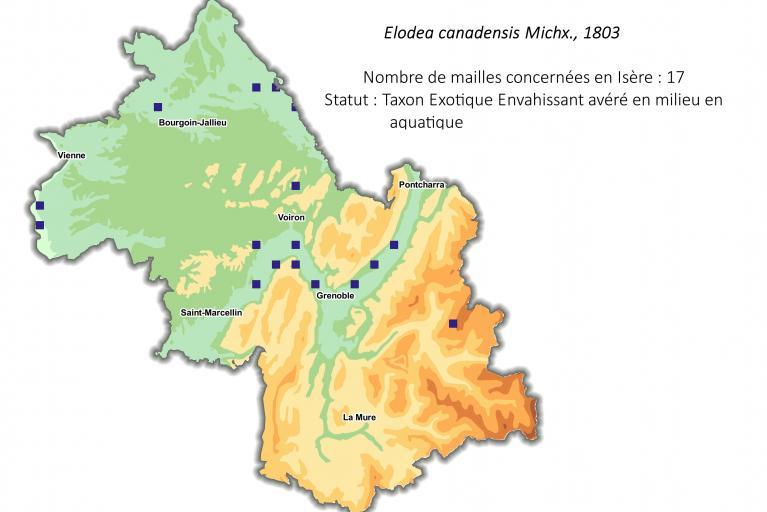 Aire de répartition de l'élodée du Canada en Isère