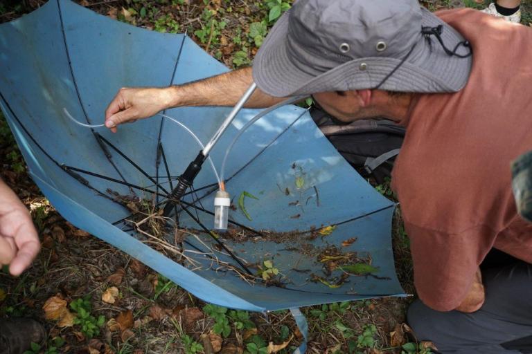 Sortie araignées, Christophe Huant, Nature isère