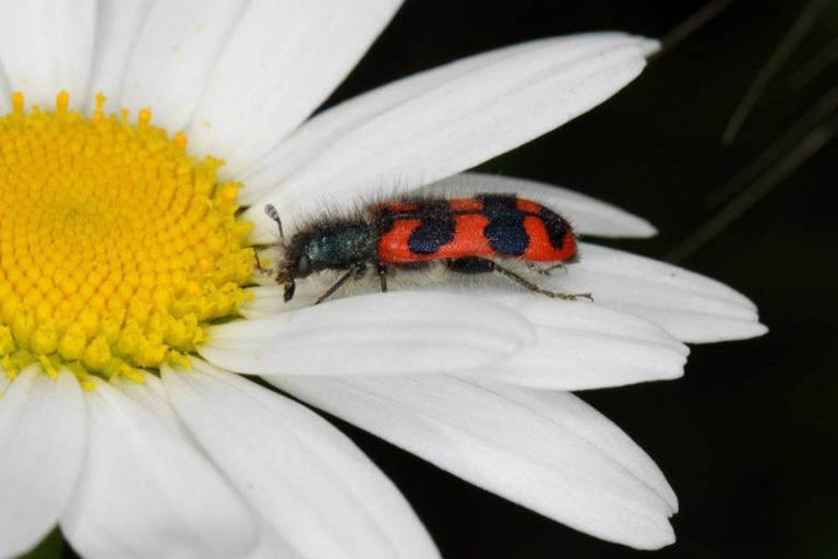 Le Clairon des ruches - gbohne CC BY-SA