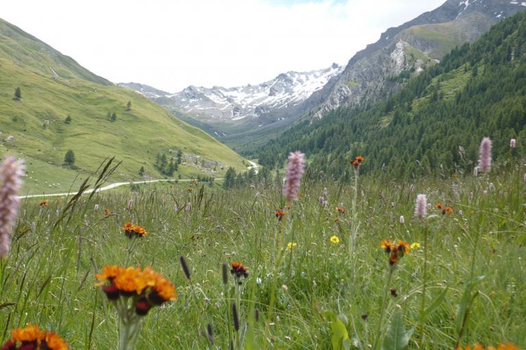 Photo paysage nature isère