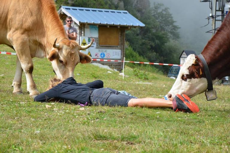 Fédération des Alpages - Dialogue avec un troupeau - Nature Isère