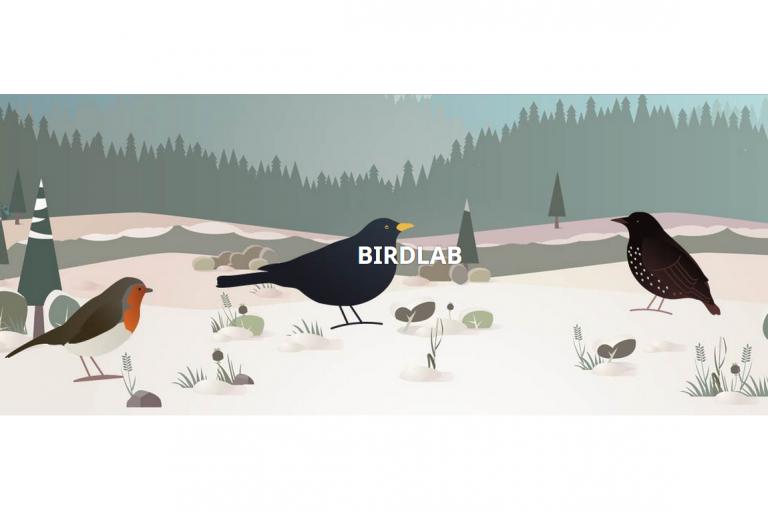 Page d'accueil du blog de BirdLab, nature isère
