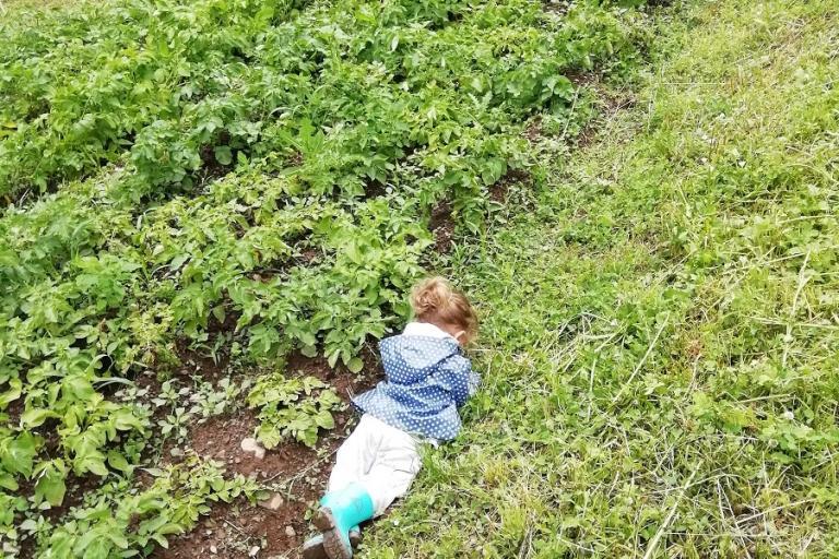 Enfant dans un champ de patates qui prend le temps