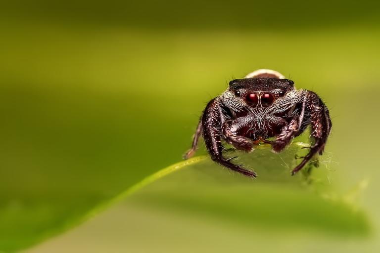 Photo d'araignée, CCO domaine public, nature isère