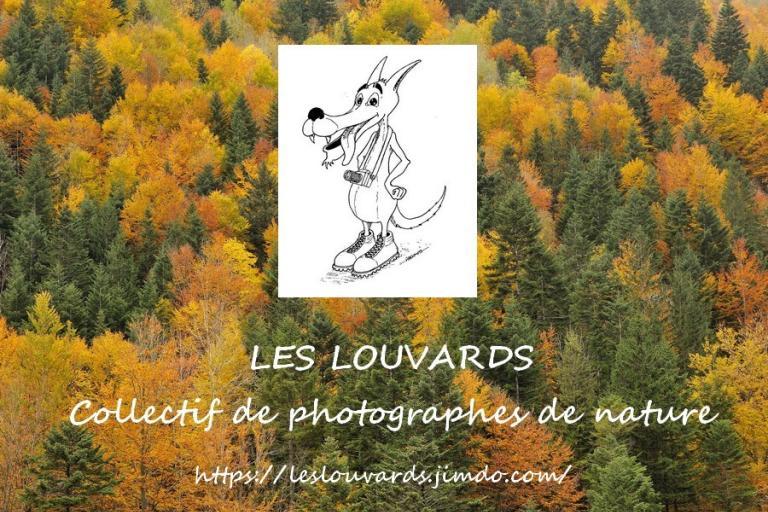 Festival photo nature, les Louvards